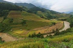El arroz coloca en colgante de MU Cang Chai, YenBai, Vietnam Fotos de archivo libres de regalías