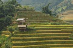 El arroz coloca en colgante de MU Cang Chai, YenBai, Vietnam Foto de archivo
