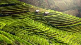 El arroz coloca en colgante de MU Cang Chai, YenBai, Vietnam imagen de archivo libre de regalías