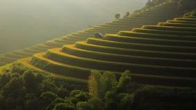 El arroz coloca en colgante de MU Cang Chai, YenBai, Vietnam almacen de video