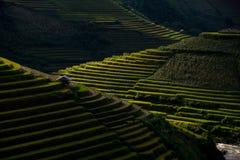 El arroz coloca en colgante en puesta del sol en MU Cang Chai, Yen Bai, Vietnam Fotos de archivo