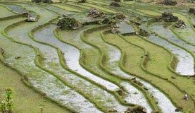El arroz coloca en valle del PA del Sa en primavera fotografía de archivo