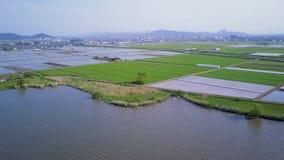 El arroz coloca la cantidad aérea, Omihachiman Japón almacen de video