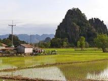 El arroz coloca la colina de la montaña del karst y una pequeña choza Foto de archivo libre de regalías