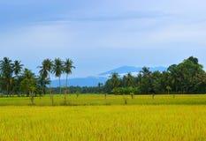El arroz coloca la visión con el fondo de la montaña Fotografía de archivo