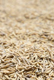 El arroz de arroz, arroz de arroz tiene no descascar hacia fuera Imágenes de archivo libres de regalías