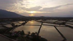 El arroz de la encuesta aérea coloca en la puesta del sol en Asia almacen de metraje de vídeo