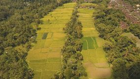 El arroz de la terraza coloca en Ubud, Bali, Indonesia metrajes