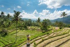 El arroz de la terraza coloca en un día soleado, Bali Imagen de archivo libre de regalías