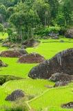 El arroz de la terraza coloca en una isla Sulawesi en Indonesia Imagen de archivo libre de regalías