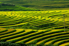 El arroz de la terraza coloca Vietnam Fotografía de archivo libre de regalías