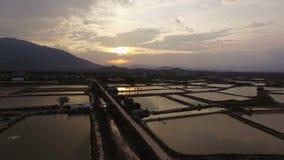 El arroz de la visión aérea coloca en la puesta del sol en Vietnam almacen de metraje de vídeo