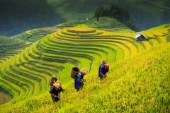 El arroz de las terrazas coloca en la montaña en el noroeste de Vietnam Fotografía de archivo