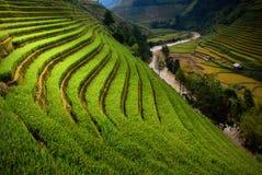 El arroz de las terrazas coloca en la montaña en el noroeste de Vietnam Fotos de archivo libres de regalías