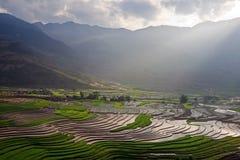 El arroz de Terrced coloca - asolee los rayos que brillan abajo de campo colgante del arroz Imágenes de archivo libres de regalías