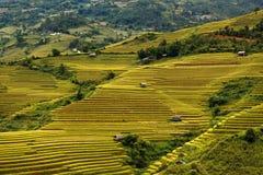 El arroz de Terrced coloca - campos colgantes del arroz del oro en MU Cang Chai Foto de archivo libre de regalías