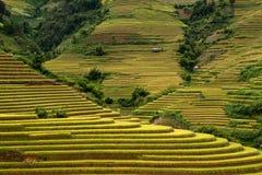 El arroz de Terrced coloca - campos colgantes del arroz del oro en MU Cang Chai Imagenes de archivo