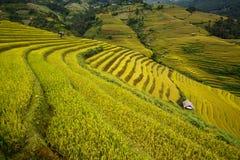 El arroz de Terrced coloca - campos colgantes del arroz del oro en MU Cang Chai Fotos de archivo