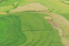 El arroz hermoso del paisaje coloca en colgante de MU Cang Chai Foto de archivo libre de regalías