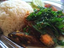 El arroz remató con cerdo y albahaca sofritos del huevo del siglo Fotos de archivo