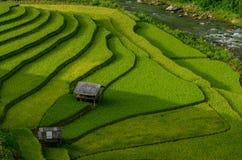 El arroz verde coloca en colgante en Muchangchai, campo del arroz de Vietnam Imagen de archivo libre de regalías