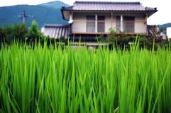 El arroz y la casa Foto de archivo libre de regalías
