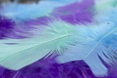 El arte azul, verde y púrpura empluma el fondo Foto de archivo