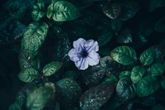 El arte de flores, lila del flowear fotografía de archivo