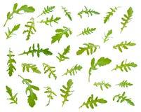 El arugula verde fresco se va a diversos ángulos en el backgrou blanco imagen de archivo libre de regalías