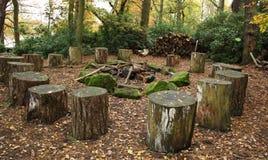 El asentar de los troncos del árbol forestal del arbolado Imagen de archivo libre de regalías