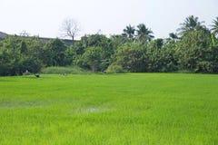 El asiático Abierto-cargó en cuenta, pájaro de Tailandia fotos de archivo