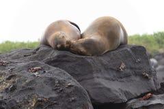 El asolear de los mares de las Islas Galápagos imagen de archivo