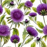 El aster púrpura hermoso florece con las hojas verdes en el fondo blanco Estampado de flores inconsútil del verano Pintura de la  Imagen de archivo