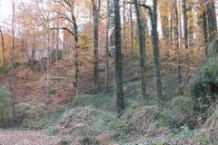 El asumir el control del otoño Foto de archivo libre de regalías