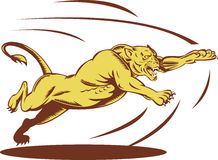 El atacar de salto de la leona Fotos de archivo