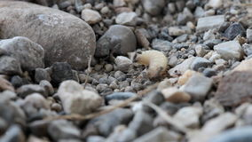 El ataque de algunas hormigas y muerde un gusano indefenso de la mosca metrajes