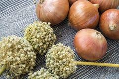 El aumento en los precios de cebollas secas, aumento excesivo en los precios de cebollas secas, Imágenes de archivo libres de regalías