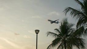 El avión vuela sobre árboles almacen de video