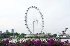 El aviador Ferris Wheel de Singapur en la ciudad de Singapur fotografía de archivo