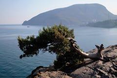 El Ayu-Dag, montaña del oso, Crimea, negro ve Fotos de archivo