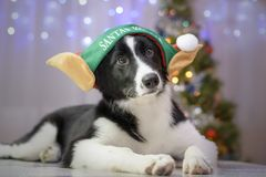 El ayudante de Papá Noel canino imagenes de archivo