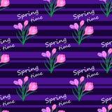 El azafrán florece pink1-01 Imagen de archivo libre de regalías