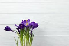 El azafrán púrpura de la flor en las hojas del pote es fondo de madera blanco de las hojas del estambre verde del pistilo Foto de archivo