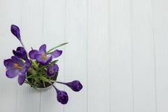 El azafrán púrpura de la flor en las hojas del pote es fondo de madera blanco de las hojas del estambre verde del pistilo Imagen de archivo libre de regalías