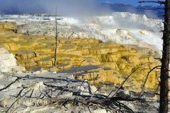 El azufre tóxico camina, actividad volcánica, parque nacional de yellowstone Imagen de archivo libre de regalías
