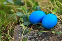 El azul dos coloreó los huevos de Pascua tradicionales en la hierba Imagenes de archivo