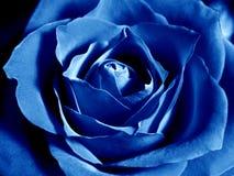 El azul profundo se levantó imagen de archivo