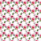 El azul violeta rosado tropical de Hawaii del modelo floral maravilloso tropical herbario verde claro del verano florece el hibis Foto de archivo