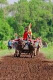 El búfalo de agua tradicional del Balinese compite con Makepung en Negara Foto de archivo libre de regalías