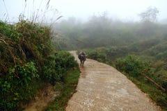 El búfalo está pasando en el camino de niebla a través de campos del arroz en el norte Foto de archivo libre de regalías